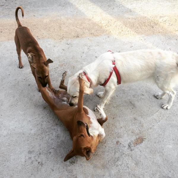 doggie love :)