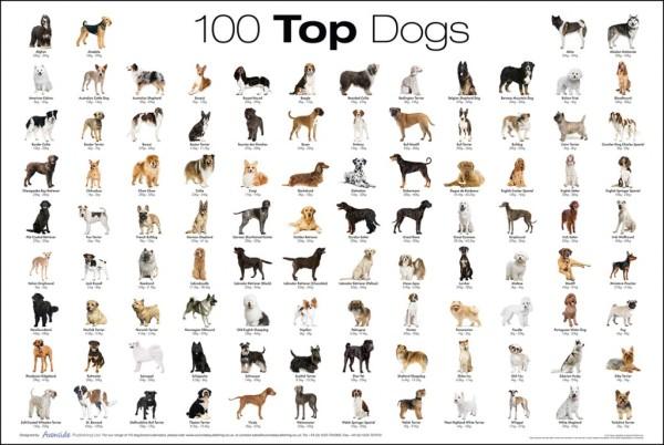 dog-breeds-list